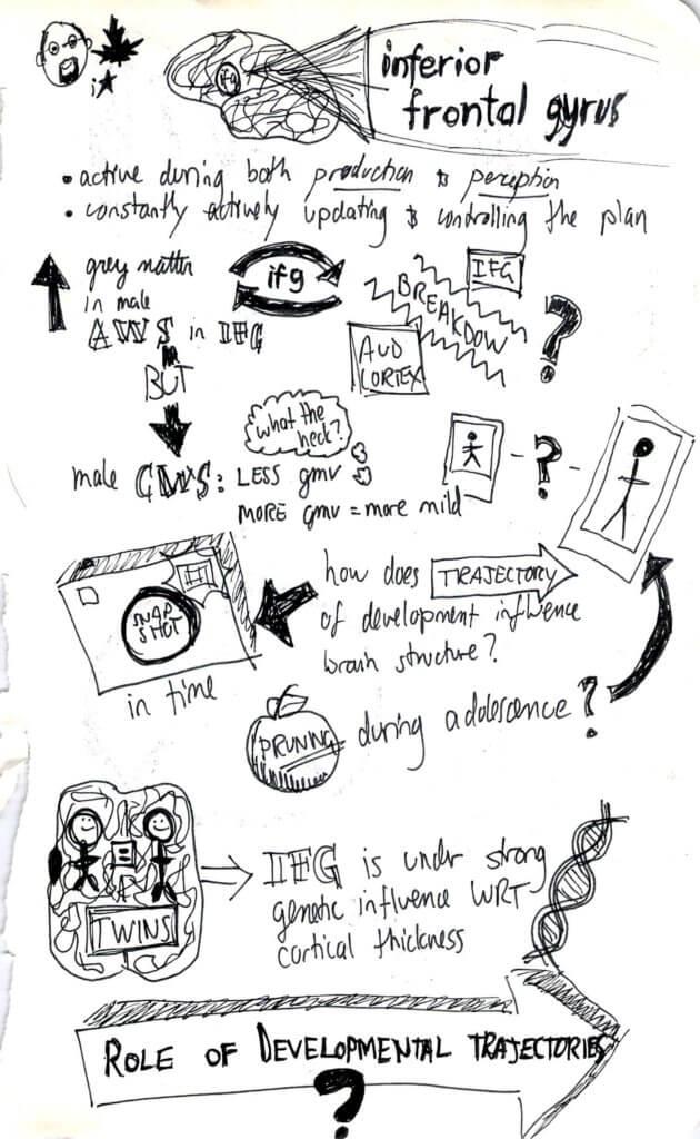 Neural bases sketchnotes 4